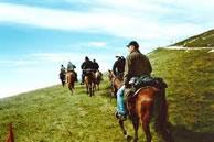 Escursioni a cavallo presso Le Mandrie